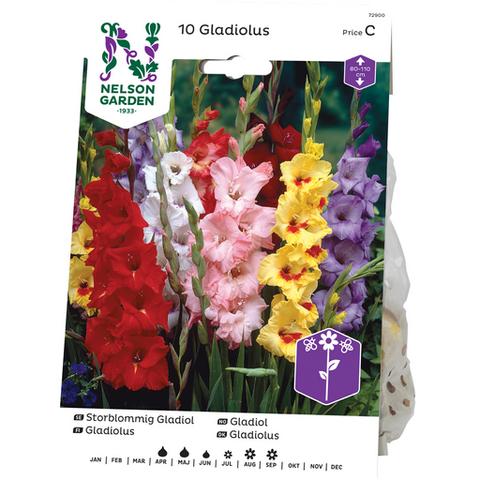 Miekkalilja, Gladiolus, värisekoitus