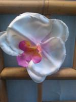Hiuskukka Orkidea Valkoinen