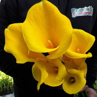 kallan eli huonevehkan mukulat keltainen 3 kpl