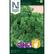 Persilja 'Moss curled 2'