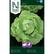 Salaatti, Kerä- 'Hilde II' KYLVÖNAUHA