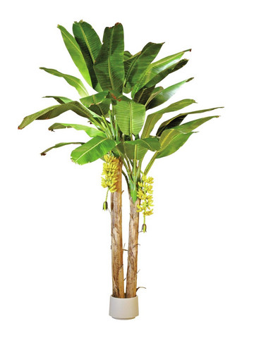 EUROPALMS Banana tree, 440cm
