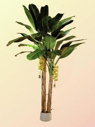 EUROPALMS Banana tree, 440cm