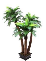 EUROPALMS Fern palm, 240cm