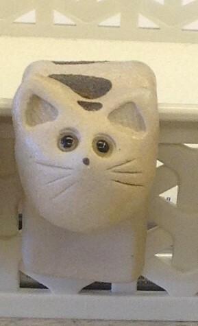 Kattilavahti kissa vaalea