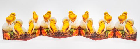 Kananpojat kananmunien joukossa