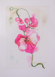 Kukkaoksa juliste 50 x 70