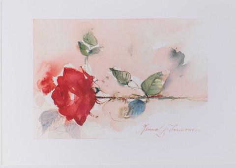 Punainen ruusu poikittain A4