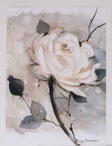 Valkoinen ruusu pienempi A4