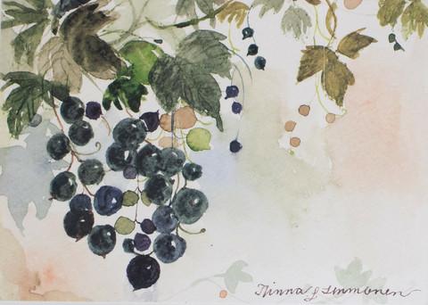 Musta viinimarja A4