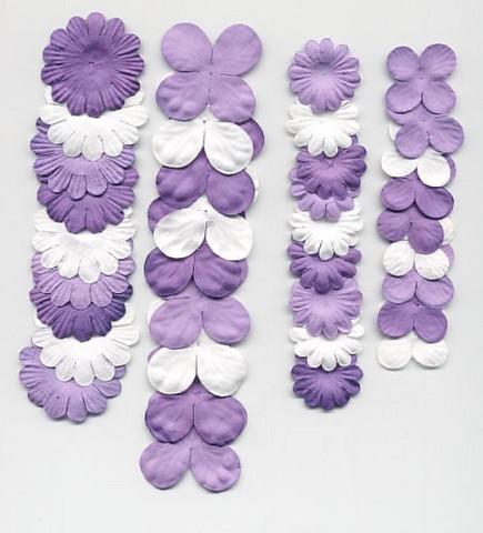 Paperikukkalajitelma Lila