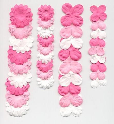 Paperikukkalajitelma Pinkki