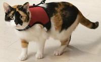 Kissan Comfort valjas, sis. taluttimen, punainen