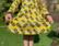 Bee. Bell dress. Jersey, organic cotton