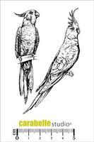 Carabelle Studio: Parrots