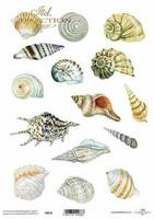 Printed Vellum A4: Shells