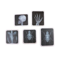 Halloween X-Ray Diecut Stickers -tarrapakkaus