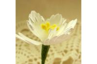 Agiart: Medium Petals -stanssi