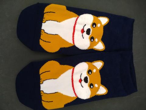 Shiba söpöilee sukat