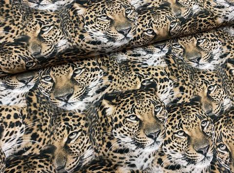 Leopardit, toffee, trikoo