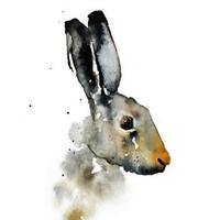 Ester Visual: Rusakko 50x70 cm