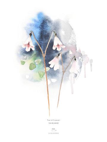 Ester Visual: Vanamo 50x70 cm
