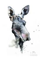 Ester Visual: Hirvi A4, 21x30 cm