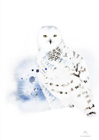 Ester Visual: Tunturipöllö 50x70 cm