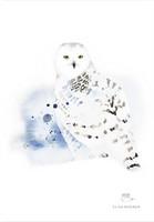 Ester Visual: Tunturipöllö A4, 21x30 cm