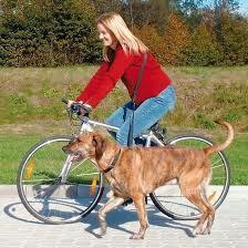 Trixie pyöräilyvyö