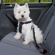 Trixie turvavaljas autoon S