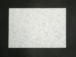 A4 Bloom Sukashi, valkea, kukkakuvio