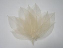 Harsolehti 'kumipuu' iso kermanvalkea, 10 kpl/paketti