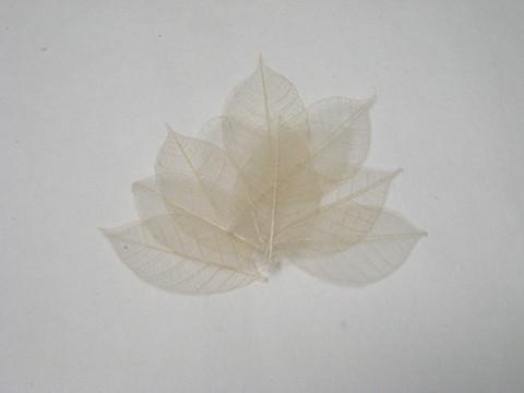 Harsolehti 'kumipuu' keskikoko kermanvalkea, 10 kpl/paketti