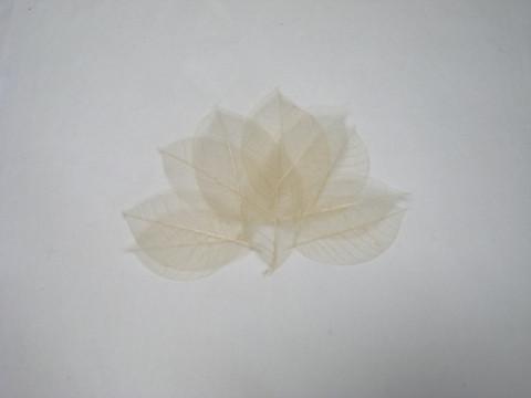 Harsolehti 'kumipuu' pieni kermanvalkea, 10 kpl/paketti