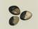 Puhvelinsarvinappi, 2-värinen 'kivi'