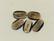 Puhvelinsarvinappi, 2-värinen soikio 32mm