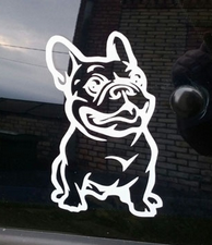 Heijastintarra Ranskan Bulldog