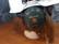 Kypärä kuulosuojaimilla (Peltor)