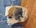 Puinen norsupatsas (33 cm)