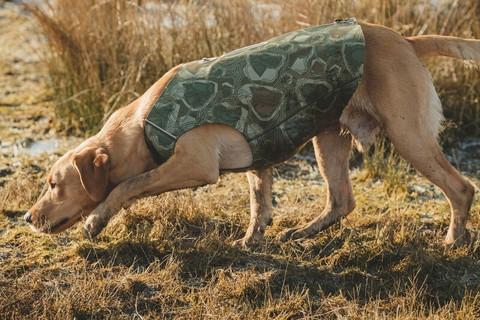 Koiran neopreeniliivi