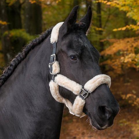 Riimu tekna, pony