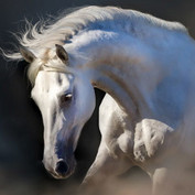 Hevoselle