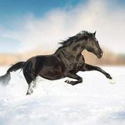 Hevosten Ruokinta