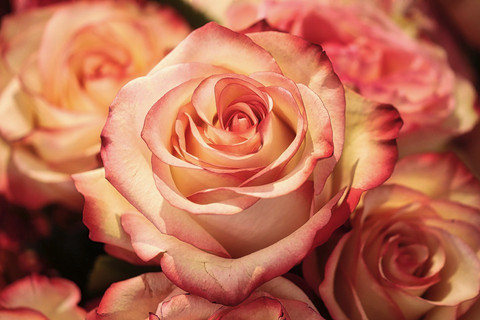 Rose-Musk - aromiöljy, fragrance oil, rohkeus, ruusu-myski