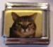 Kissa 49