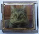 Kissa 4, yhdistelmäpala 18 mm