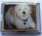 Koira 1, yhdistelmäpala 18 mm