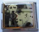 Koira 2, yhdistelmäpala 18 mm