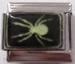 Hämähäkki, pimeässä hohtava palakoru
